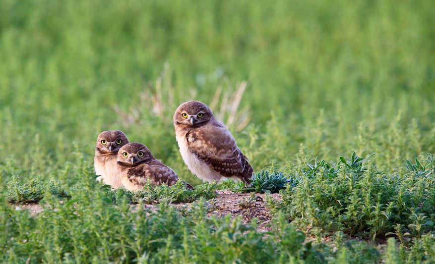 A family of birds in the wild.
